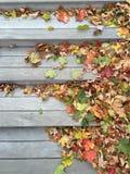 Farbige Blätter auf Treppe Stockfotografie