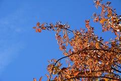 Farbige Blätter gegen einen glänzenden Himmel Stockfoto