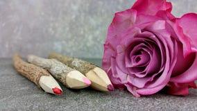Farbige Bleistifte mit einer Rose Stockfoto