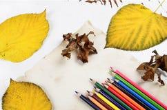 Farbige Bleistifte und Herbst Lizenzfreie Stockfotografie
