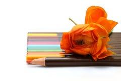 Farbige Bleistifte und orange Blume Stockbilder