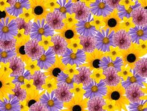 Farbige Blumenblüten, Collagenhintergrund Stockfotos