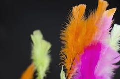 Farbige Feder auf Schwarzem Lizenzfreie Stockbilder