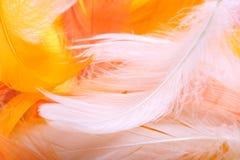 Farbige Federn stockbilder