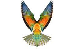 Farbige Flügel auf einem weißen Hintergrund Lizenzfreies Stockbild