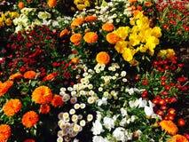 Farbige Frühlingsblumen Stockfotos