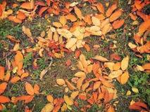 Farbige gefallene Blätter Stockfoto