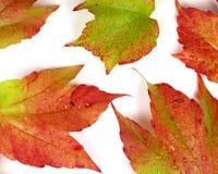 Farbige Herbstblätter auf weißem Hintergrund Lizenzfreies Stockfoto