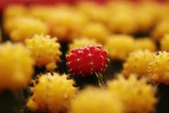 Farbige Kaktus-Anlagen Stockbild