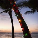 Farbige Leuchten auf Palme. Lizenzfreie Stockfotografie