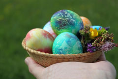 Farbige Ostereier in den Korb- und Frühlingsblumen Stockfoto