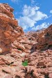 Farbige Schlucht in Nuweiba Dahab lizenzfreies stockbild