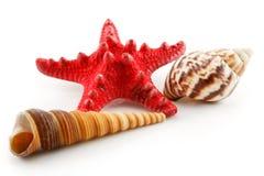 Farbige Seashells (Starfish und Kamm-Muschel) getrennt Lizenzfreie Stockfotografie