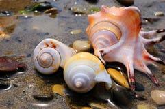 Farbige Shells Stockfotos