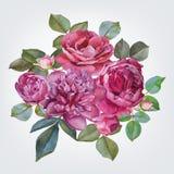 Farbige und Schwarzweiss-Blendenblume Blumenstrauß von Aquarellrosen und -pfingstrosen Abbildung Lizenzfreies Stockbild