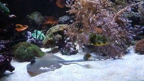 Farbige waterworld Fische Stockbilder