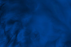 Farbiger abstrakter Hintergrund der Federn Lizenzfreies Stockfoto