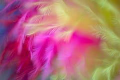 Farbiger abstrakter Hintergrund der Federn Stockbilder