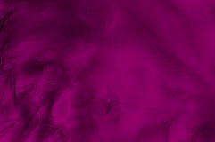 Farbiger abstrakter Hintergrund der Federn Lizenzfreie Stockfotografie