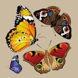 Farbiger Batterfly-Vektor Lizenzfreies Stockfoto