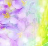 Farbiger Blumenhintergrund Stockfotos