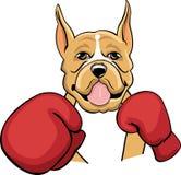 Farbiger boxender Boxer Stockbilder
