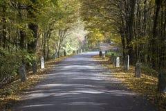 Farbiger Herbst und eine alte Straße Stockfoto