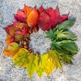 Farbiger Herbstlaub auf einem Steinhintergrund Stockfotografie
