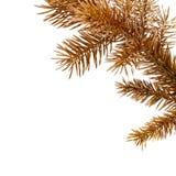 Farbiger Kiefernbrunch und -kegel. Stockbilder