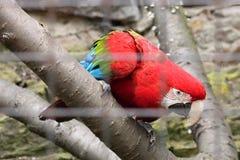 Farbiger Papagei in einem Käfig lizenzfreie stockbilder