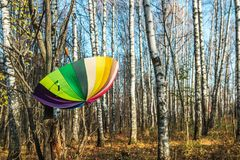 farbiger Regenschirm, der an einem Baum im Herbst Park hängt lizenzfreie stockbilder
