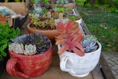 Farbiger saftiger Garten stockbild