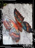 Farbiger Schmetterling auf der Wand lizenzfreies stockfoto