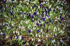 Blumenteppich Lizenzfreies Stockbild