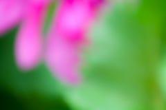 Farbiger unscharfer Hintergrund Stockbilder