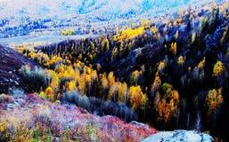 Farbiger Wald Stockfotografie