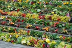 Farbiges Blumen Meer Stockfoto