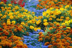 Farbiges Blumenbett Lizenzfreies Stockfoto
