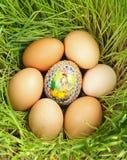 Farbiges Ei zwischen unbemalten Eiern Lizenzfreies Stockbild