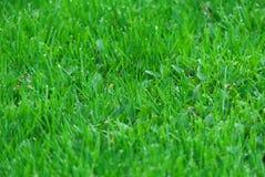 farbiges Gras auf weißem Hintergrund Lizenzfreies Stockbild