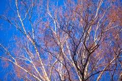 Farbiges Muster auf blauem Himmel im Frühjahr Lizenzfreie Stockfotos