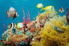 Farbiges Unterwassermeeresflora und -fauna in einem Korallenriff stockbild