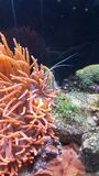 Farbiges waterworld fischt Gelb Lizenzfreies Stockfoto