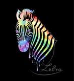 Farbiges Zebra auf Schwarzem Stockbild