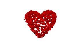 Farbmischanzeige von roten Liebesherzen auf weißem Hintergrund stock footage