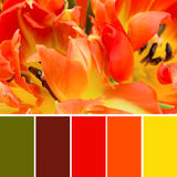 Farbmuster und orange Tulpen Stockfotografie