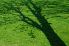 Farbton des Baums lizenzfreies stockfoto