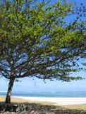 Farbton unter Baum Stockfotos