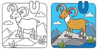 Farbtonbild von lustigem urial Alphabet U Lizenzfreies Stockfoto