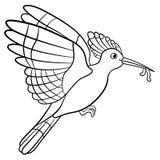 Farbtonseiten Mutter Hoopoe hält einen Wurm in ihrem Schnabel lizenzfreie abbildung